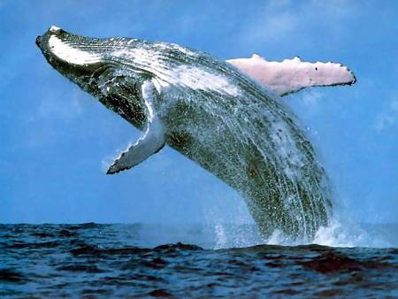 Whale Watching Sydney - Find Attractions