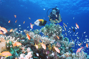 Drop Zone Dive Site - Find Attractions
