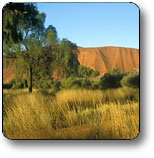 Uluru - Kata Tjuta National Park - Find Attractions