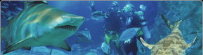 Scuba World - Find Attractions