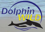 Dolphin Wild - Find Attractions