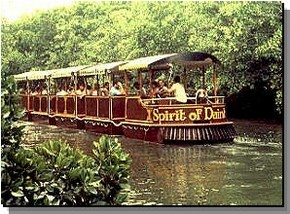Daintree Rainforest River Trains - Find Attractions