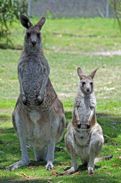 Potoroo Palace - Find Attractions