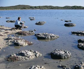 Lake Thetis Stromatolites - Find Attractions