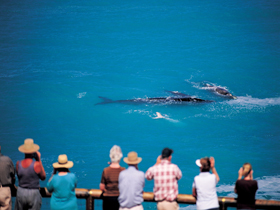 Whale Watching At Head Of Bight - Find Attractions