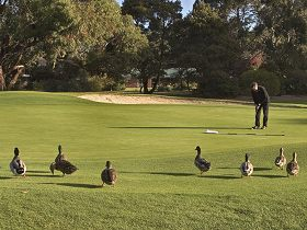 Royal Hobart Golf Club - Find Attractions