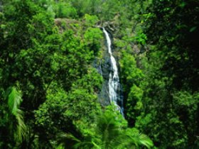 Kondalilla National Park - Find Attractions