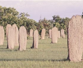 Magnetic Termite Mounds - Find Attractions