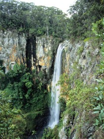 Gondwana Rainforests of Australia - Find Attractions