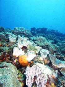 Mudjimba Old Woman Island Dive Site - Find Attractions