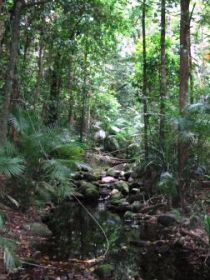 Mossman Gorge Rainforest Circuit Track Daintree National Park - Find Attractions