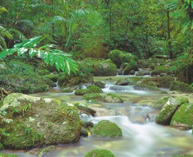 Mossman Gorge Daintree National Park - Find Attractions
