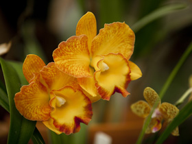 Queens Park - Orchid House - Find Attractions