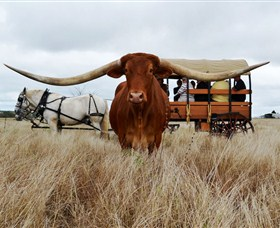 Texas Longhorn Wagon Tours and Safaris - Find Attractions