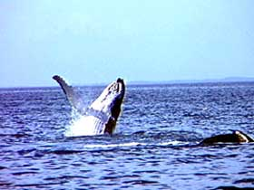 Whale Watching - Find Attractions