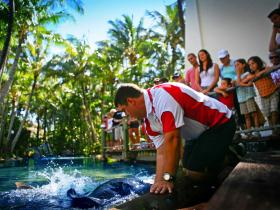 The Living Reef on Daydream Island - Find Attractions