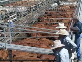 Dalrymple Sales Yards - Cattle Sales - Find Attractions