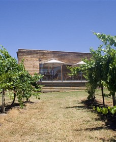 Shantell Vineyard - Find Attractions
