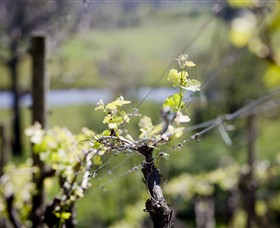 Elan Vineyard and Winery - Find Attractions