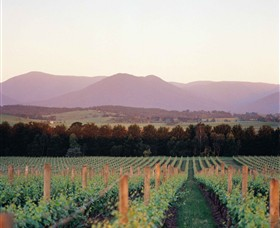 Domaine Chandon - Find Attractions