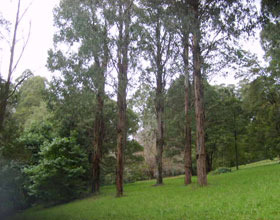 Mount Dandenong Arboretum - Find Attractions