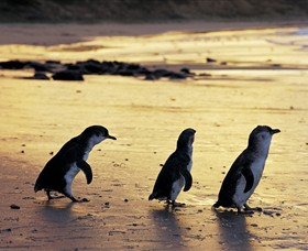 Phillip Island Nature Park - Find Attractions