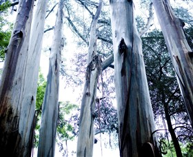 Dandenong Ranges National Park - Find Attractions