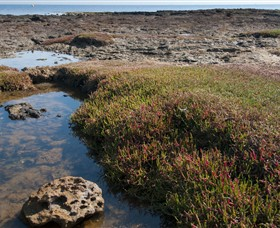 Ricketts Point Marine Sanctuary - Find Attractions