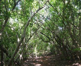 Eucalypt Trail - Find Attractions