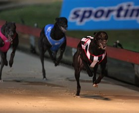 Dapto Dogs - Find Attractions