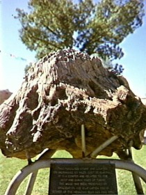 Fossilised Tree - Find Attractions