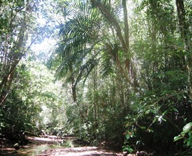 Mount Lewis National Park - Find Attractions