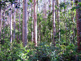 Cathu State Forest - Find Attractions