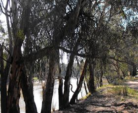 Mia Forest Drives Narrandera - Find Attractions