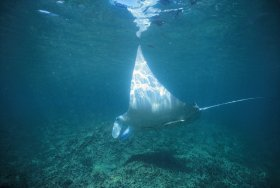 Manta Ray Bay Dive Site - Find Attractions