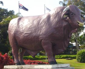 Rockhampton Bull Statues - Find Attractions