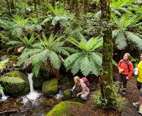 Baw Baw National Park - Find Attractions