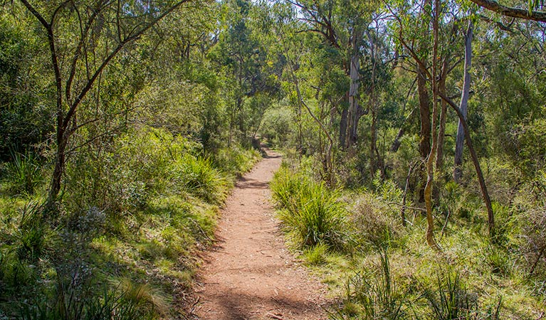 Mares Forest Creek walking track - Find Attractions