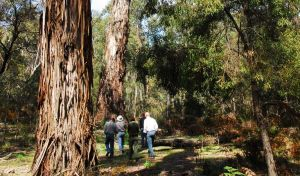 Tallaganda National Park - Find Attractions