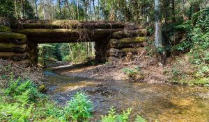 Myrtle Scrub scenic drive - Find Attractions