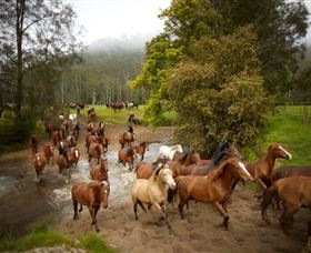Glenworth Valley Horse Riding - Find Attractions