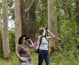 Chichester State Forest - Find Attractions