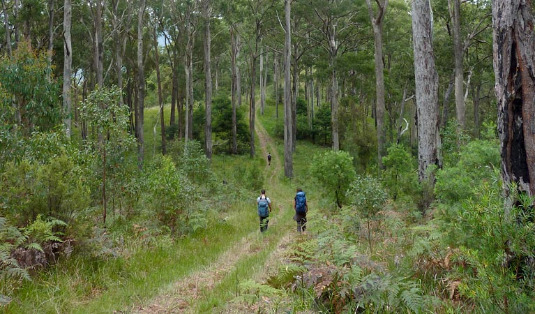 The Green Gully track - Find Attractions