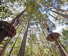 TreeTop Adventure Park Central Coast - Find Attractions