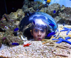 Sea Life Sunshine Coast - Find Attractions