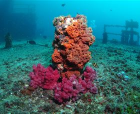 HMAS Brisbane Dive Site - Find Attractions