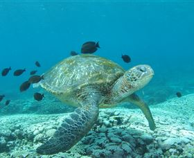 Flinders Reef Dive Site - Find Attractions