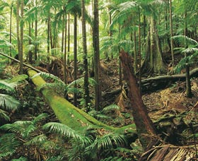 Wollumbin-Mount Warning National Park - Find Attractions