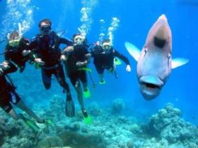 Henderson's Rock Dive Site - Find Attractions