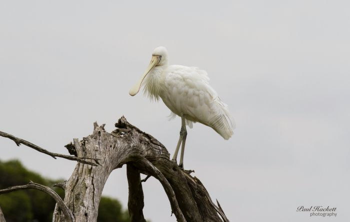 Melbourne Birding Tours - Find Attractions
